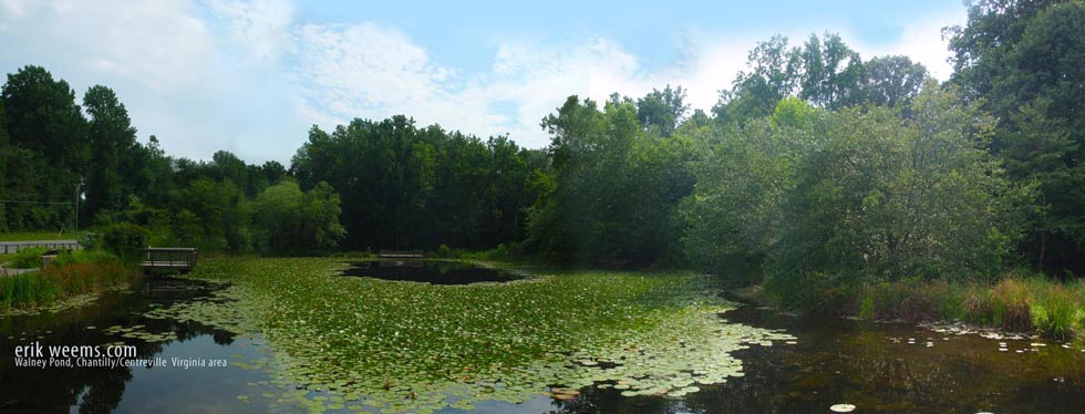 Walney Pond Chantilly Virginia