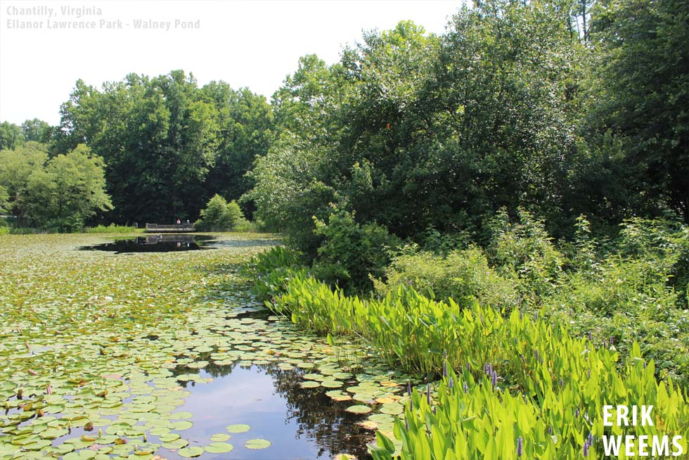 Pond Ellanor Lawrence Park Pond - Walney Chantilly - photo Erik Weems