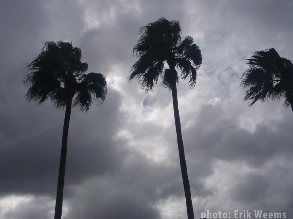 Palms in Orlando Florida under storm by Erik Weems