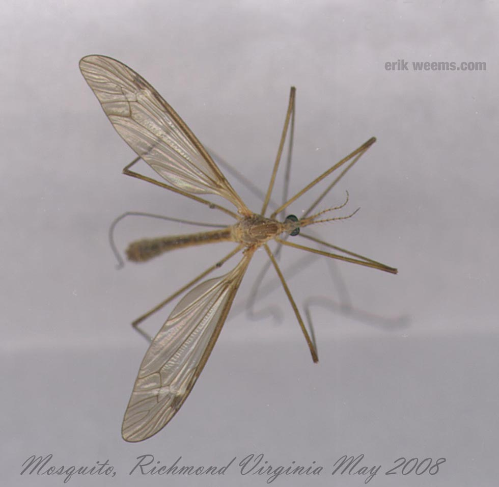 Mosquito Virginia Richmond